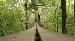 Take A Ride On The Longest Zipline In Ohio At Tree Frog Canopy Tours