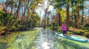 Spend Your Days Exploring Tranquil Waterways With Otter Paddle Orlando In Florida
