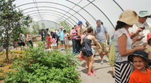Spend A Magical Afternoon At Kansas's Largest Butterfly House At Wichita Botanica Gardens