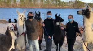 Hike With Llamas At Second Wind Farm In New Jersey