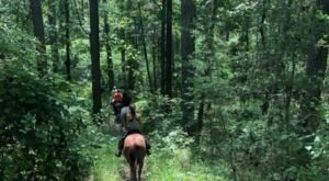 Visit The Kisatchie By Horseback On This Unique Tour In Louisiana