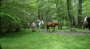 Take a Charming Ride Through Wintry Woods With A Carriage Ride At Cades Cove Riding Stables In Tennessee