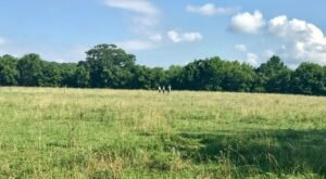 Mill Ridge Park Joins The Ranks As One Of Nashville's Newest City Parks