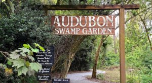 The Audubon Swamp Garden In South Carolina Takes You Through A Lush And Enchanting Swamp