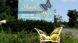 Spend A Magical Afternoon At Magic Wings Butterfly Conservatory, Massachusetts' Largest Butterfly House