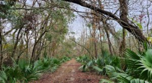 Get Away From It All At The Secluded Palmetto Island State Park In Louisiana