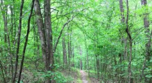 You'll Hear Live Chimpanzees And Feel Like An Explorer As You Hike The Monkey Trail In Louisiana