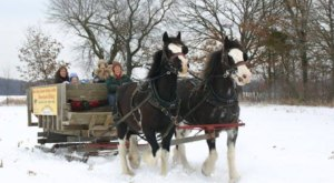 Take a Charming Ride Through Wintry Woods With A Sleigh Ride At Red Ridge Ranch In Wisconsin