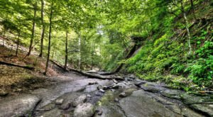 Chestnut Ridge Park Is A Beautiful, Must-Visit Destination In New York