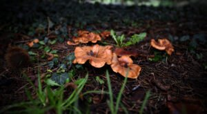 Two Of The World's Most Toxic Mushrooms Can Be Found In Massachusetts Each Year