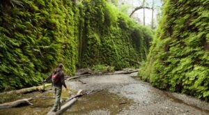 Fern Canyon In Northern California Was Named One Of The Most Stunning Lesser-Known Places In The U.S.