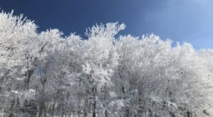 A Natural Phenomenon, Rime Ice, Has Been Popping Up In North Carolina And It's Breathtaking