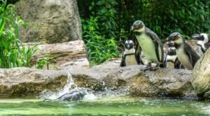 Enjoy An Awesome Weekend Adventure At New York's Seneca Park Zoo