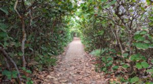 Take A Nature Tour Through Tunnels Of Trees At Blowing Rocks Preserve In Florida