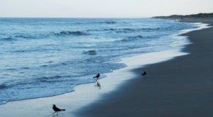 Take A Quiet, Oceanside Stroll On The Beach When You Visit Sandbridge, Virginia