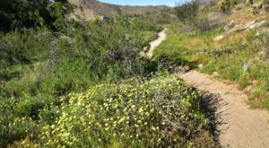 The Easy 1.5-Mile Yaqui Well Nature Trail That's Tucked Inside The Southern California Desert