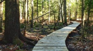 This Often Overlooked Trail System At Pineland Public Reserved Land Offers 3.2-Miles Of Forested Fun