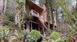 Sleep Among Lush Ferns And Towering Trees At The Lilly Glen Tree House In Oregon