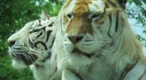 Spend The Weekend At The Dakota Zoo, A Fun-Filled Riverside Zoo In North Dakota