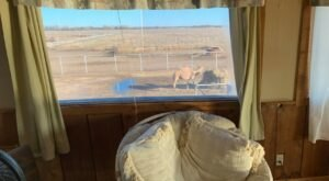 You Can Enjoy Breakfast With A Zoo At Hedrick's Exotic Animal Farm In Kansas