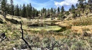 The Northrup Canyon Trail Will Show You A Completely New Side Of Washington