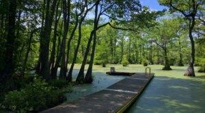 Explore A True Hidden Gem In North Carolina At Merchants Millpond State Park