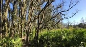 What Was Once A Phosphate Mining Site Is Now An Incredible State Park In Florida