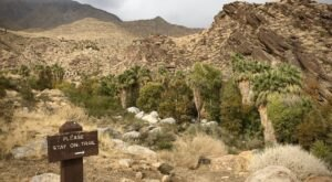 Andreas Canyon Loop Is An Easy Hike In Southern California That Will Lead You Someplace Unforgettable