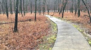 Nature Is Accessible To Everyone Along Slunger Creek Nature Trail In Arkansas