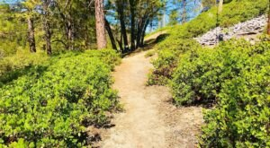 The Short And Sweet Hiking Trail In Southern California, Big Pines Nature Trail, That Is Impossible Not To Love