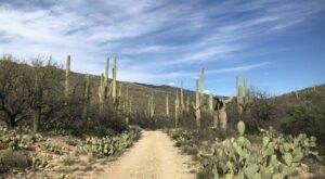 Hike Through An Impressive Forest Of Giant Saguaro Cacti On Hope Camp Trail In Arizona