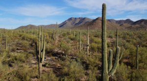 Rugged Desert Beauty Awaits At Tucson Mountain Park In Arizona