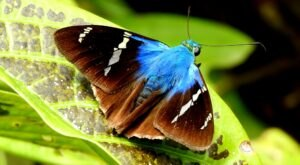 Spend A Magical Afternoon At Judy Istock Butterfly Haven, Illinois' Largest Butterfly House