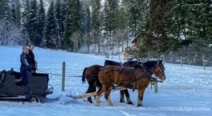 Take a Charming Ride Through Wintry Woods With A Sleigh Ride At Red-Tail Canyon Farm In Washington