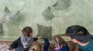 Play With Stingrays And Baby Sharks At The Fort Worth Zoo In Texas For An Adorable Adventure