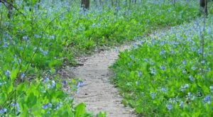 The Gorgeous 3-Mile Hike In Missouri's St. Francois State Park That Will Lead You Past A Waterfall, Wildflowers, And A Creek