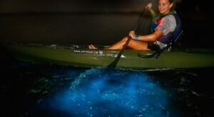 Try The Ultimate Nighttime Adventure With A Day Away Bioluminescence Kayak Tours In Florida