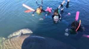 Take A World Famous Manatee Tour From River Safaris In Florida