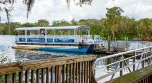 Spot Manatees, Alligators, And Other Wildlife When You Take A Tour Of The St. Johns, Florida's Longest River