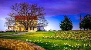 Get Lost In 400,000 Beautiful Daffodil Plants At Moss Mountain Farm In Arkansas
