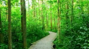 Pennsylvania's Asbury Woods Looks Like Something Out Of Oz