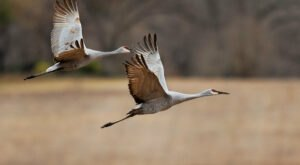 The Arrival Of 20,000+ Sandhill Cranes In Southern Colorado Is A Sight That Everyone Should See