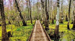 Explore 6,000 Acres Of Louisiana's Swamps At Lake Fausse Pointe State Park