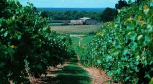 Listen To Music While Sipping Wine At Honker Hill Vineyard In Illinois