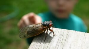 This Spring, Millions Of Cicadas Are Set To Emerge In Kentucky After 17 Years Underground