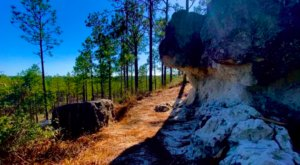 The Gorgeous 1.5-Mile Hike In Louisiana's Kisatchie Forest That Will Lead You Past A Treetop View