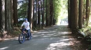 Ride An E-Bike Through The Redwood Forest In Northern California For An Inspiring Adventure