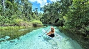 Take A Unique Crystal Clear Kayak Tour Through The Natural Springs Of Florida