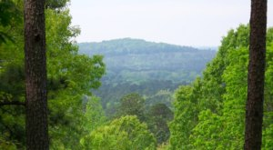 Escape To Driskill Mountain For A Beautiful Louisiana Nature Scene