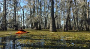Rent A Kayak In Louisiana And Go Off The Grid Through The Atchafalaya Swamp